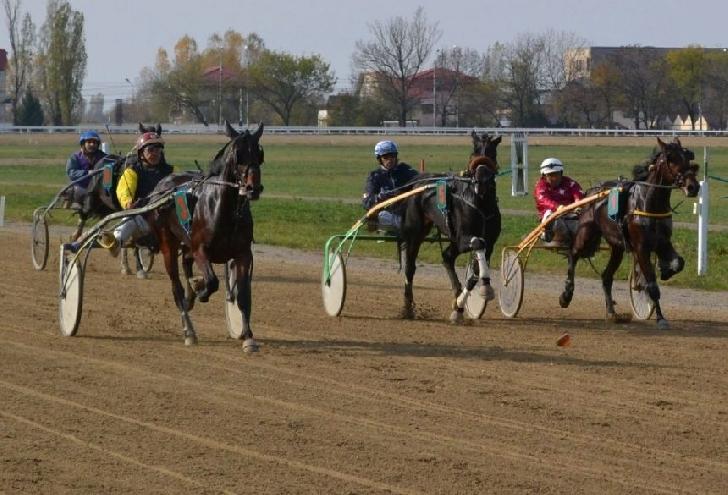 """Zece cai la start , duminica,la """"Premiul de Toamnă"""""""