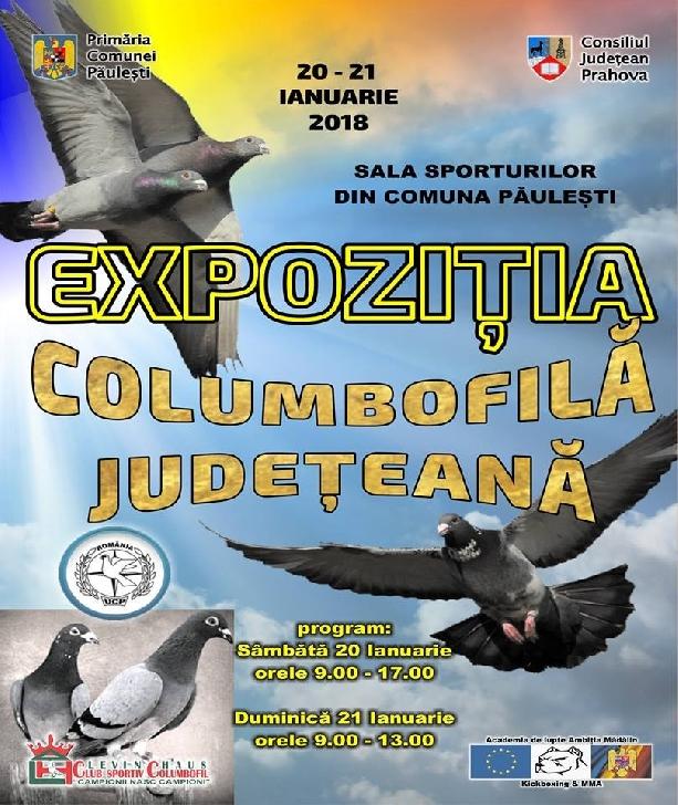 Expozitie columbofila la Paulesti