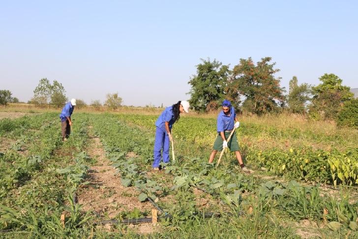 Proiectul CONCORDIA Agricultură, întreprindere socială sustenabilă pentru inserţie profesională, a avut o valoare de 95.190,77 CHF