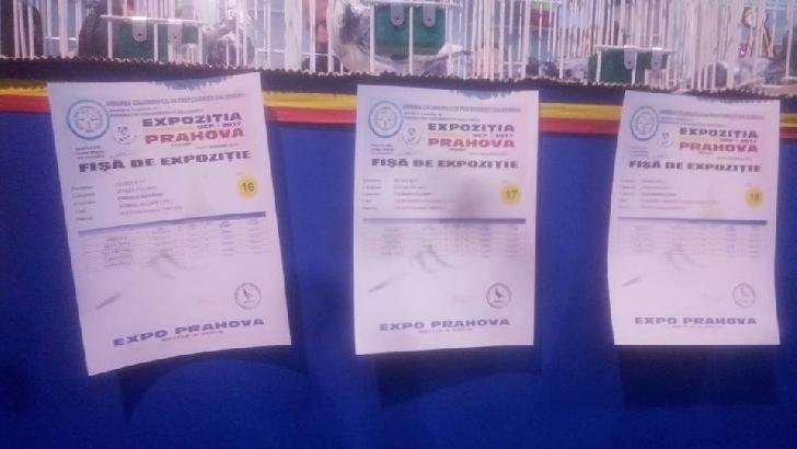 A XXV-a Editie a Expozitiei Nationala Columbofile UCPR, Ploiesti-Prahova 2018  va avea loc in week-end