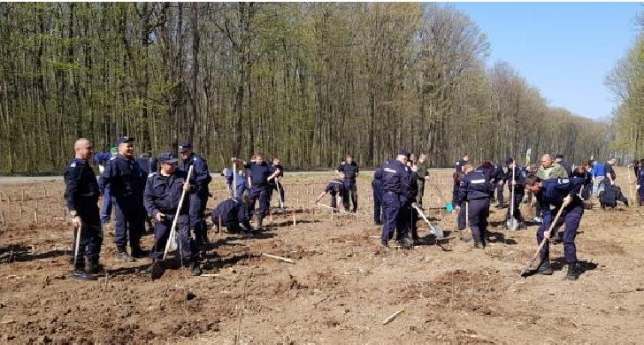 Jandarmii prahoveni au plantat arbori