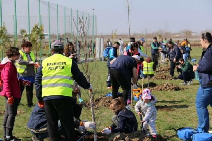 OMV Petrom a plantat  1500 de puieti in Parcul Municipal Ploiesti Vest