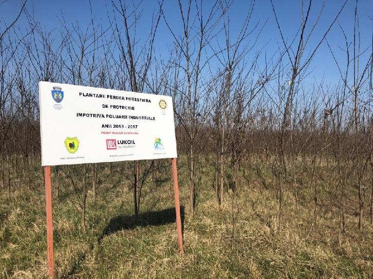 Peste 150 de voluntari mobilizaţi de Clubul Rotary Ploieşti au plantat  în  weekend 3000 de puieţi de salcâm