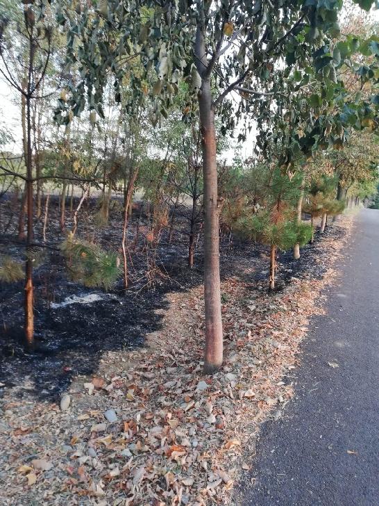 Incendii de vegetaţie, suspecte în comuna Plopu