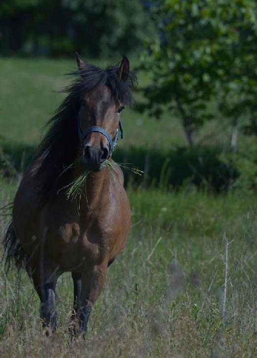 Fiecare cal merita o sansa la o viata mai buna.Campania nationala SAVE THE HORSES ROMANIA