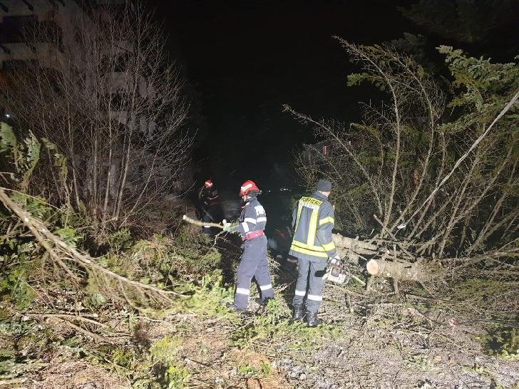 Pompierii prahoveni au acţionat pentru degajarea copacilor căzuţi pe carosabil