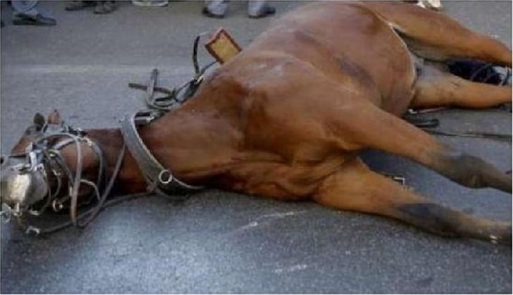 Accident neobişnuit în Poiana Vărbilău. Un cal a fost accidentat mortal de un autorism