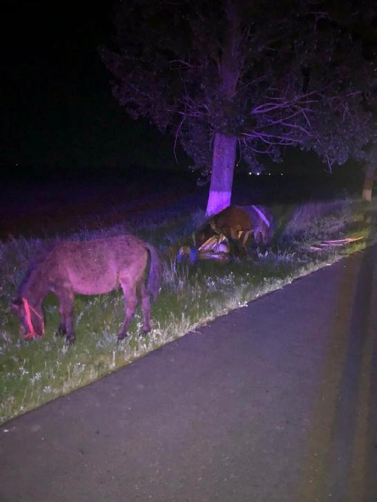 Un tânăr din comuna Drăgăneşti a fost găsit de poliţiştii rutieri, după ce a părăsit locul accidentului