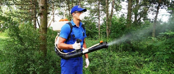 Primăria municipiului Ploieşti va efectua servicii de dezinsecţie pe suprafaţa domeniului public, în perioada 15 - 21 iunie 2020