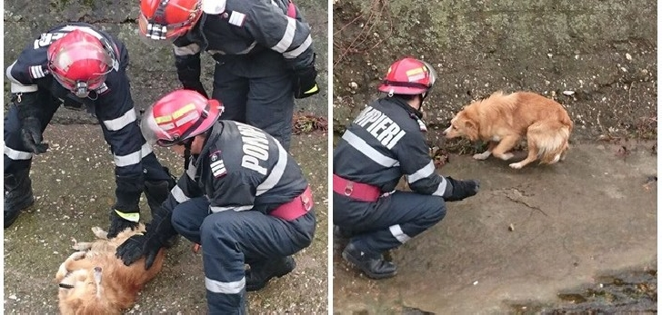 Pompierii prahoveni au salvat un câine căzut într-o fântână, la Urlaţi