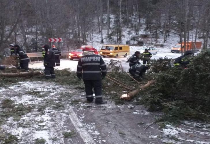 Pompierii prahoveni au intervenit la degajarea unui copac căzut pe carosabil, în zona localitatii Cheia