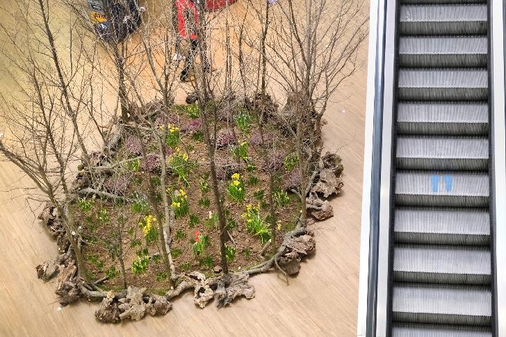 """Ploieşti Shopping City şi Şcoala de Flori au creat o pădure în mall, în cadrul iniţiativei de încurajare a colectării selective """"Natura unui MULŢUMESC"""""""