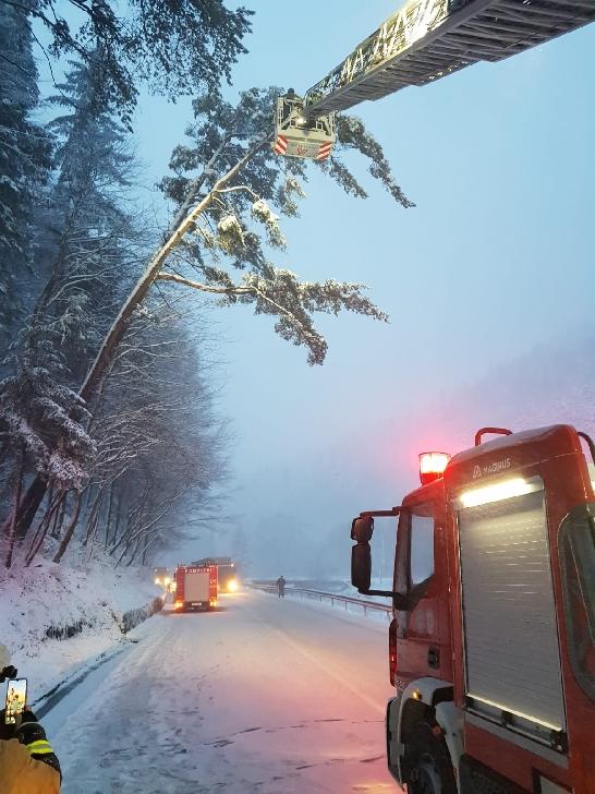 Pompierii prahoveni au intervenit la tăierea a doi copaci care s-au aplecat către şosea, la Azuga