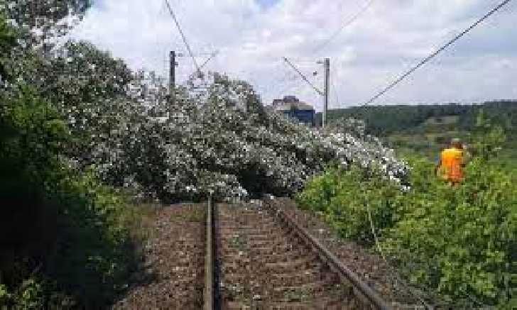 Un copac a căzut peste calea ferată dintre Plopeni şi Slănic. Două trenuri de călători au fost oprite