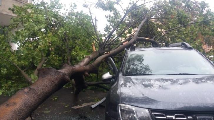 Un copac a căzut peste  două autoturisme in Ploiesti