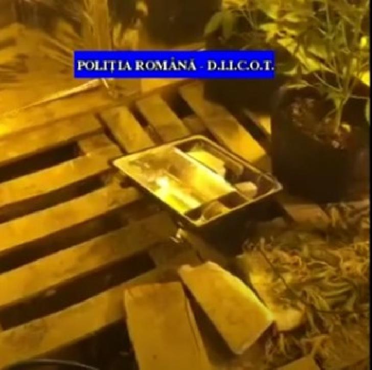 Percheziţii la un bărbat care cultiva droguri de mare risc  în subsolul unei case  din  Satu Mare (video)