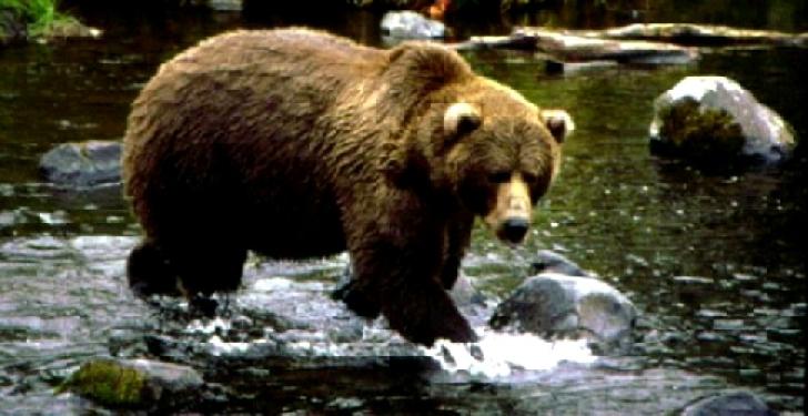 Un bărbat a fost ranit de un urs în pădurea de la Telega