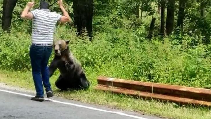 Un bărbat a fost atacat de un urs la Comarnic, în cartierul Secăria